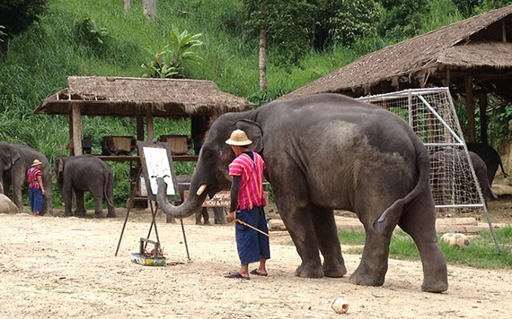 Chiang Mai Full Day Lampang Elephant School And Lampoon