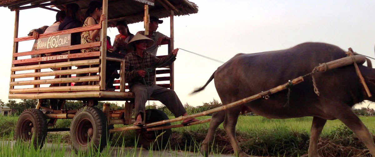 Buffalo Cart And Farming Life