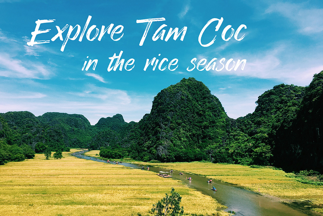 Explore Tam Coc in the rice season